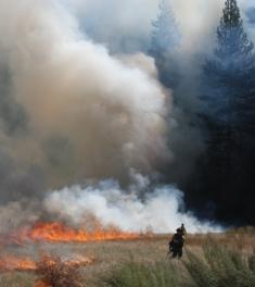 Fire Crews Ignite Cook's Meadow During a Yosemite Valley Prescribed Burn