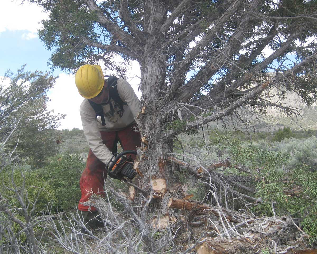 firewise-madera-county-nrcs-tree-mortality-assistance